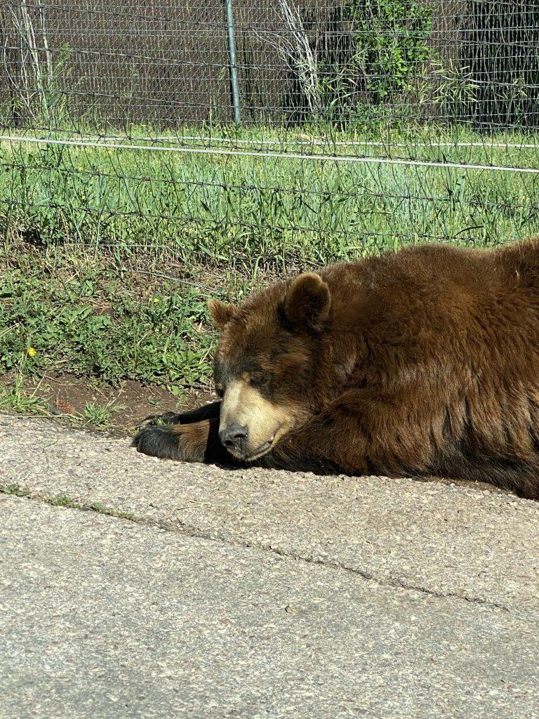 bear country usa rapid city south dakota